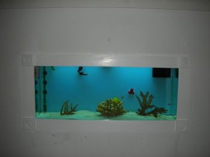 Rated #53: 55 Gallons Saltwater Fish Tank - same tank during the day