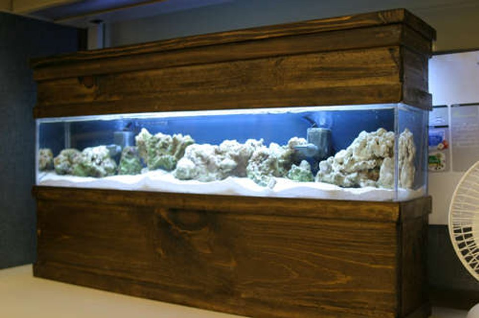 Rated #61: Saltwater Fish Tank - Updated photo of my DIY 5 gallon  tank