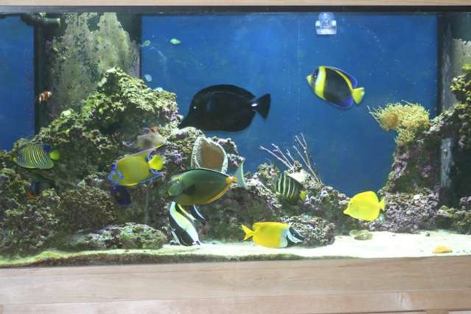 Rated #63: 210 Gallons Saltwater Fish Tank - 210 Gallon FOWLR