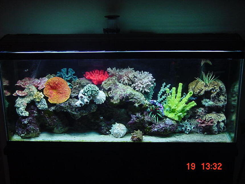 Rated #64: 55 Gallons Saltwater Fish Tank - 55 gallon marine tank with 85 pounds of cured live figi rock!