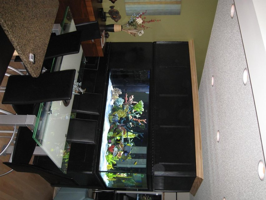 Rated #2: 350 Gallons Saltwater Fish Tank - 350 Gallon Tank, divides our Dining Room from Our Living Room.... I couldn't live without it!!!!