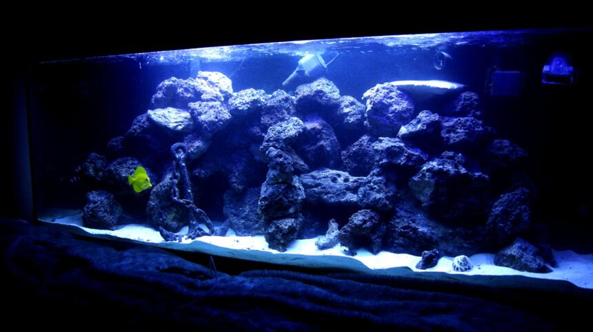 Rated #38: 100 Gallons Saltwater Fish Tank - 100 gallon reef tank. corals consist of mushrooms, buttons, leathers, hammer corals, and some other that i am not sure of but are in there.