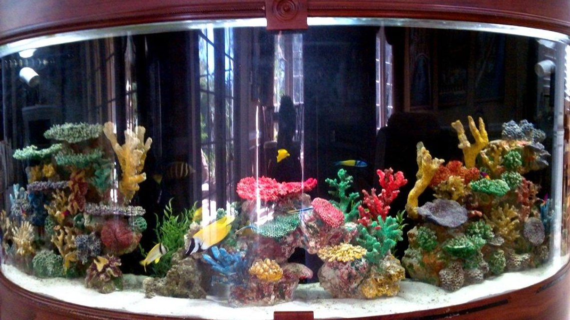 Rated #1: 250 Gallons Saltwater Fish Tank - Custom built around staircase saltwater reef tank. Difficult dimensions due to its half circle shape. About 250 gallons. Many fish kept over the years from angel fish to nurse sharks and octopuses. Just started filling it up again.