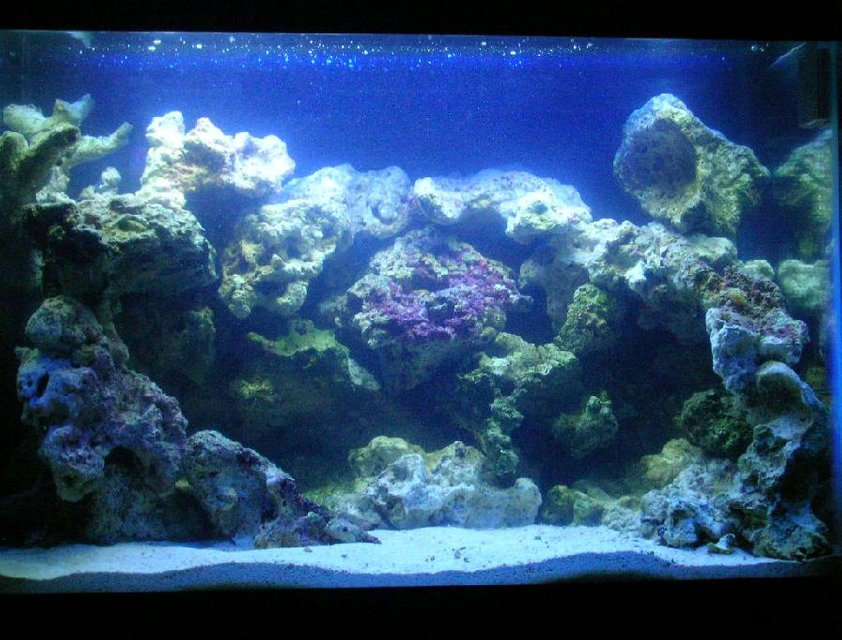 Rated #21: 20 Gallons Saltwater Fish Tank - Has a Sea Clone 150, Uv Turbo Twist, and a Hang On Filter Emperor 280. Live rock , live sand and 5 Tipes of Gobys