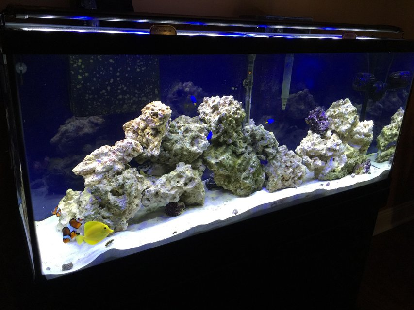 Rated #3: 55 Gallons Saltwater Fish Tank - 55 gallon FOWLR
