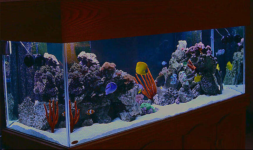 Rated #67: 180 Gallons Saltwater Fish Tank - 180 gallon saltwater fish tank w/live rock, green carpet anemone, various mushrooms.