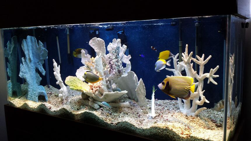 "Rated #1: 220 Gallons Saltwater Fish Tank - I'm not great photographer (needless to say) but you get the point. I open to questions and ""constructive"" criticism."