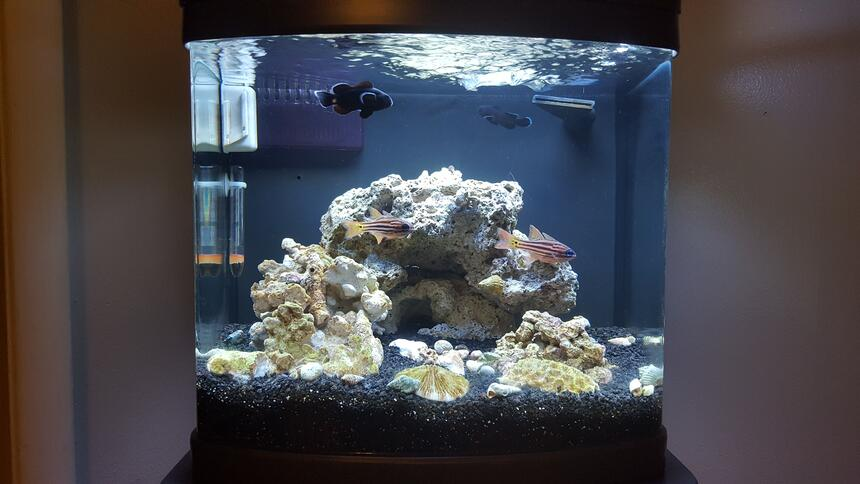 Rated #5: 12 Gallons Saltwater Fish Tank - Midnight Black Clowns