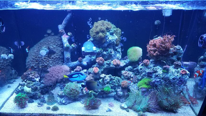 Rated #68: 30 Gallons Saltwater Fish Tank - Started back up a year ago. Red sea 250 tank.