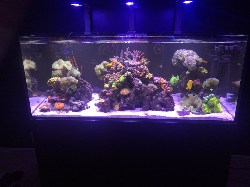 Rated #5: 165 Gallons Saltwater Fish Tank - 10 leagues above