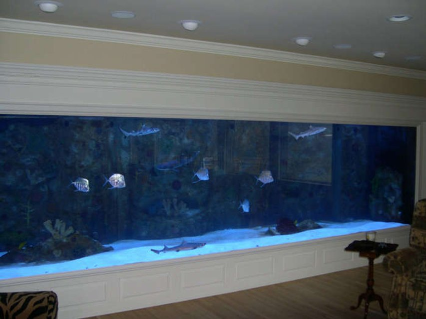 Rated #21: 4000 Gallons Saltwater Fish Tank - my 4000 gallon tank
