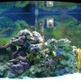 46 gallons saltwater fish tank (mostly fish, little/no live coral) - Six months ago