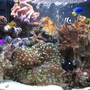 4 gallons saltwater fish tank (mostly fish, little/no live coral) - 2 WEEKS OLD My 16 litre (4 gallon) reef tank : )