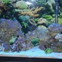 55 gallons saltwater fish tank (mostly fish, little/no live coral) - my tank