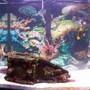 90 gallons saltwater fish tank (mostly fish, little/no live coral) - fish relaxing
