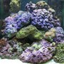 60 gallons saltwater fish tank (mostly fish, little/no live coral) - 60 gal cube