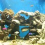 180 gallons saltwater fish tank (mostly fish, little/no live coral) - 180g