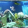 110 gallons saltwater fish tank (mostly fish, little/no live coral) - NEW TANK PIC