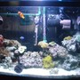 30 gallons saltwater fish tank (mostly fish, little/no live coral) - main tank