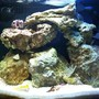20 gallons saltwater fish tank (mostly fish, little/no live coral) - 20 Gallon Nano Tank Updated Picture.