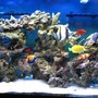 90 gallons saltwater fish tank (mostly fish, little/no live coral) - My 90 Gallons Tank with fishes only
