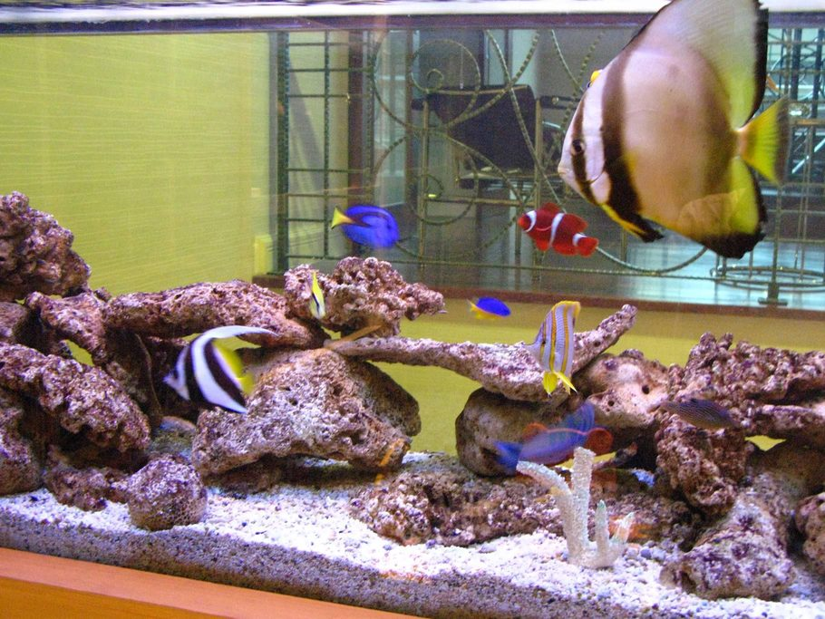 Kidwell 39 s saltwater fish tanks photo id 13637 full for Red saltwater fish
