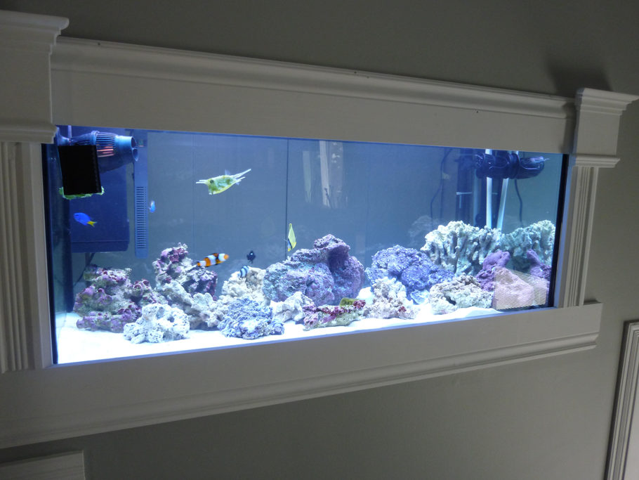Here Is My Front View of my wall mounted aquarium that i just start 3 week ago !