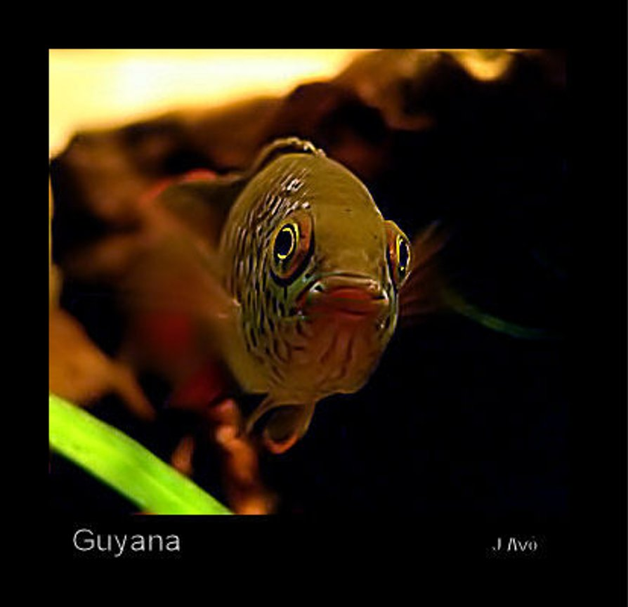 freshwater fish - nannacara anomala - golden dwarf cichlid stocking in 15 gallons tank - Nannacara anomala (face model)