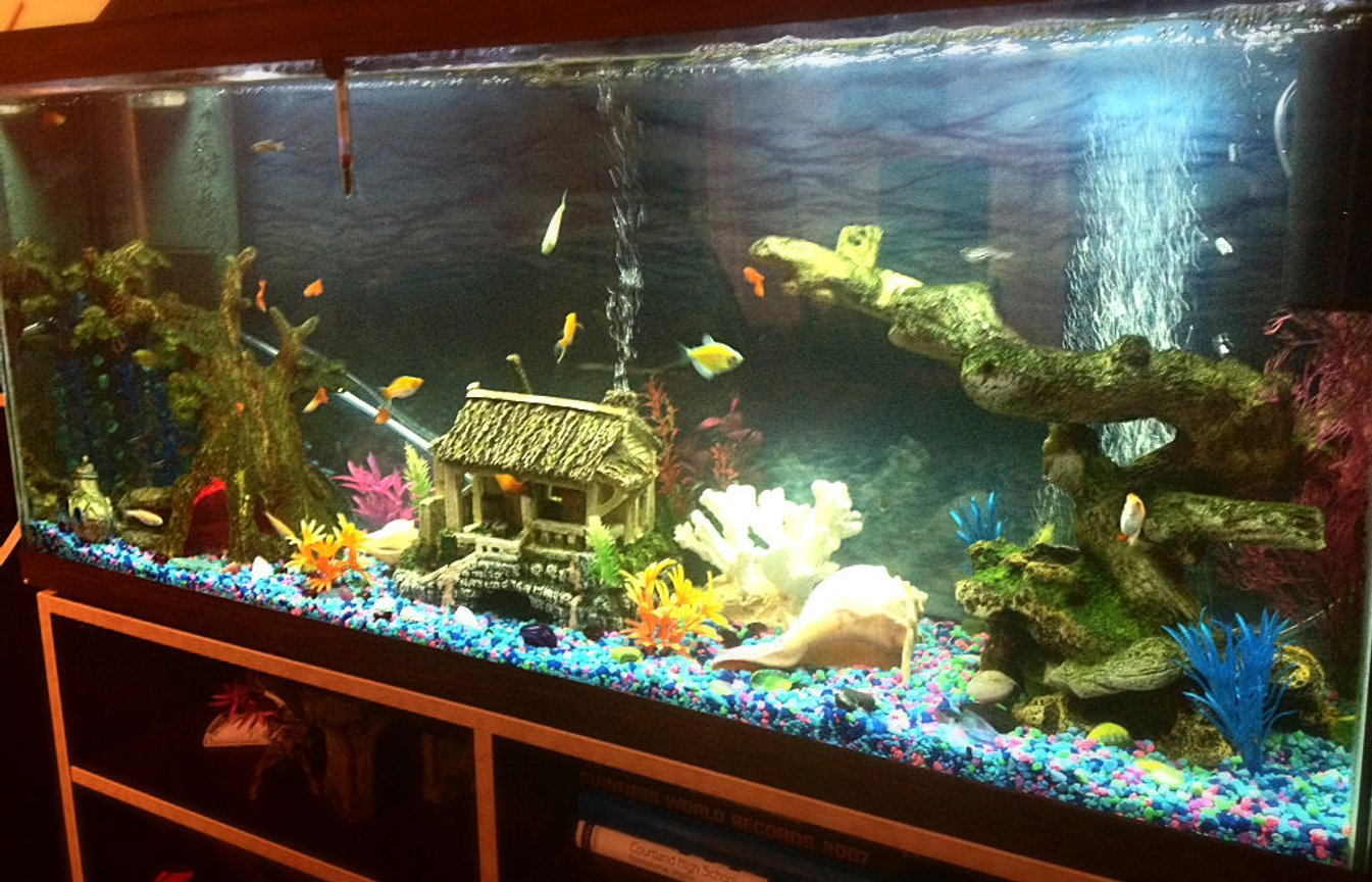 freshwater fish stocking in 50 gallons tank - 50 Gallon, Tropical Fish all found at Petsmart