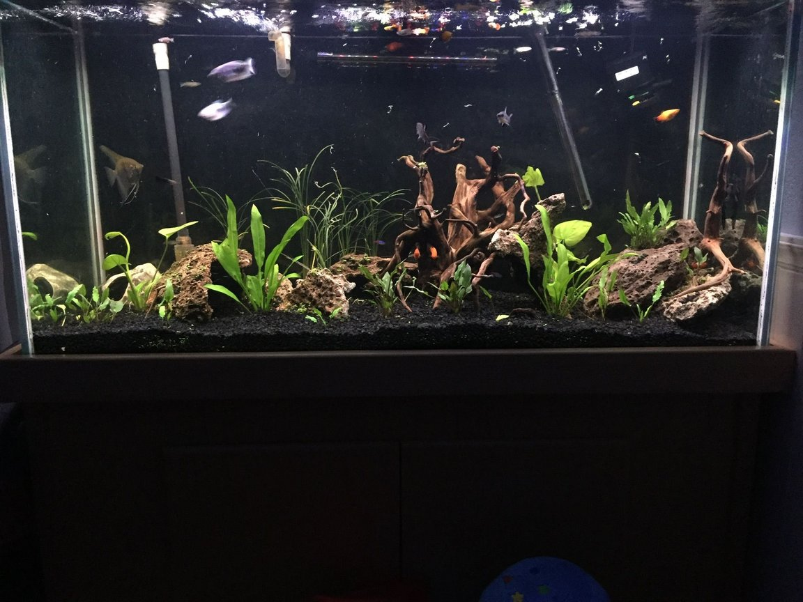 freshwater fish stocking in 90 gallons tank - Lava rock more plants