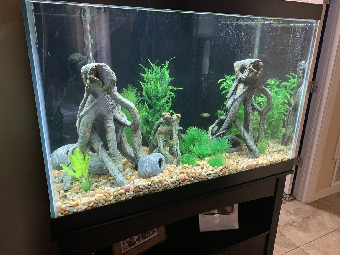 freshwater fish stocking in 65 gallons tank - 65 g