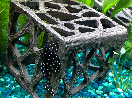 Rated #4: Freshwater Fish - Hypancistrus Inspector L-102 - Snowball Pleco Stocking In 15 Gallons Tank - snowball pleco