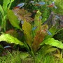 freshwater fish - paracheirodon innesi - neon tetra jumbo stocking in 85 gallons tank - MY NEW AGE OF AQUA