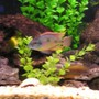 freshwater fish stocking in 60 gallons tank - Another picture of my tank