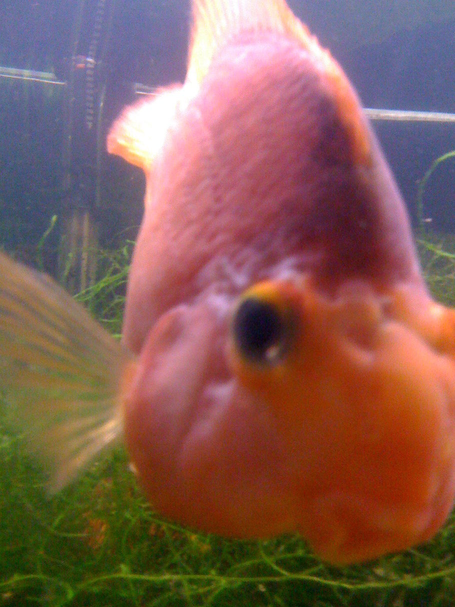 MamaPuff\'s Freshwater Fish Details and Photos - Photo 24769 ...