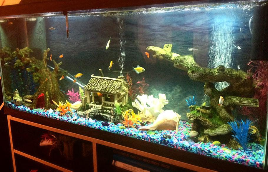 Petsmart fish tanks simple this is my largest tank at for Petsmart fish aquariums