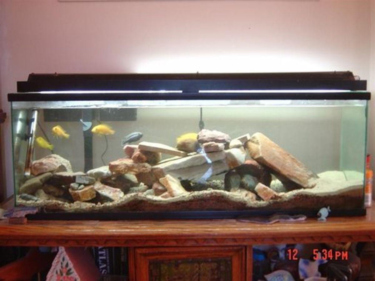 Using Carbon in a Freshwater Aquarium | RateMyFishTank com