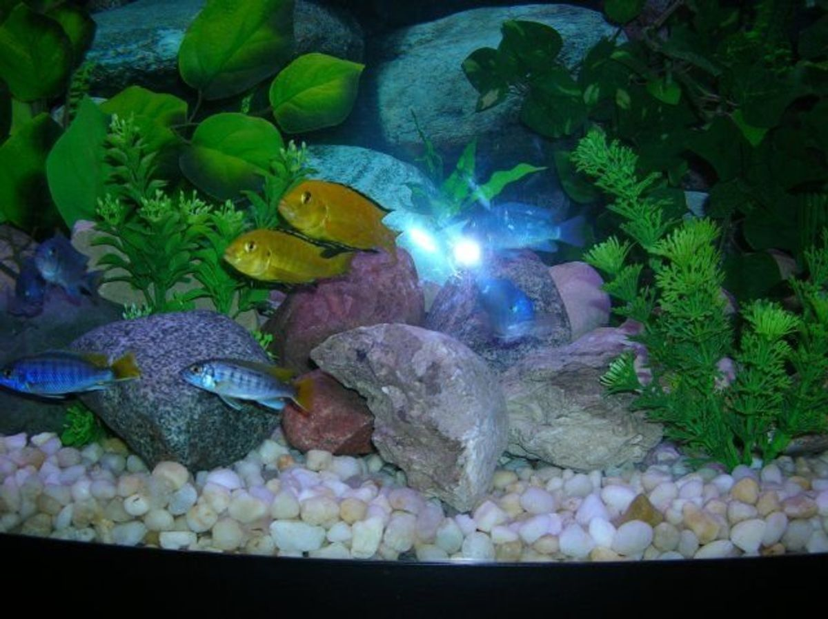 The Natural Environments Of African And South American Cichlids