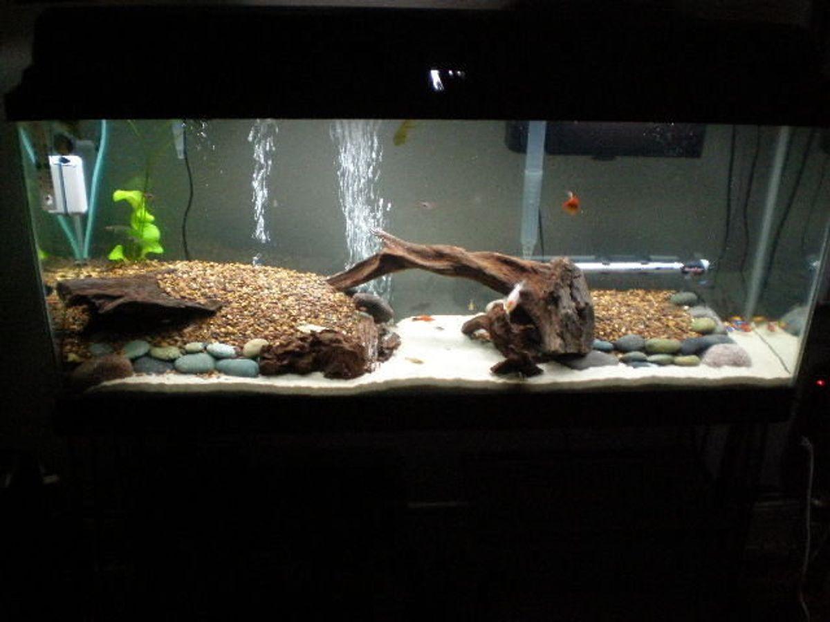 rate my fish tank