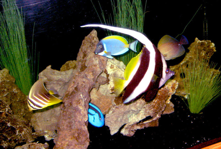 Group Picture!  : )