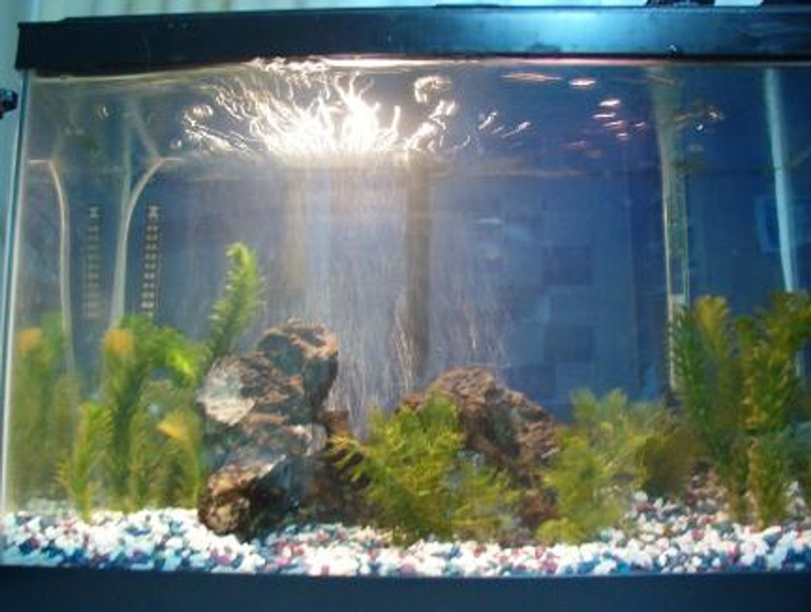 freshwater fish tank (mostly fish and non-living decorations) - New at the fish thing...getting ideas for my own tank!