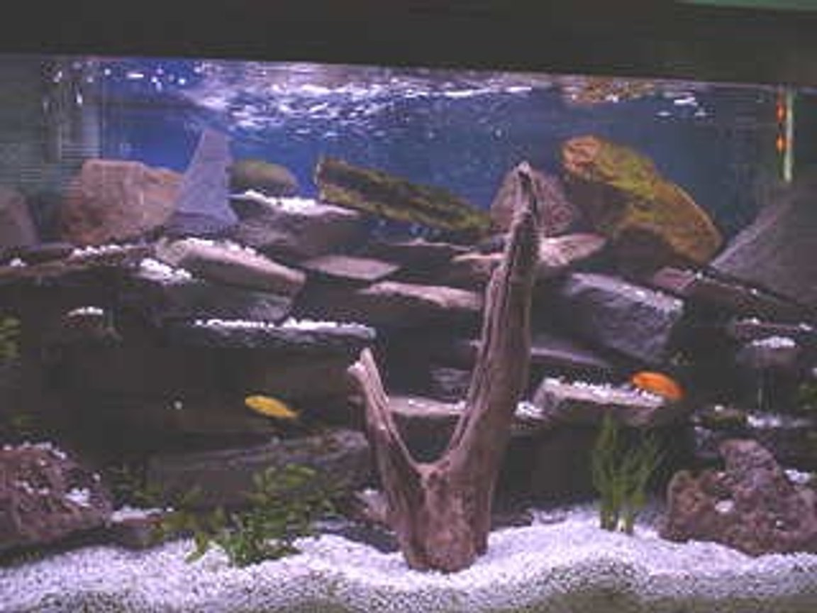 33 gallons freshwater fish tank (mostly fish and non-living decorations) - I love Chiclid tanks, espescially ones that are heavly planted and have numerouse rock outcrops and caves.