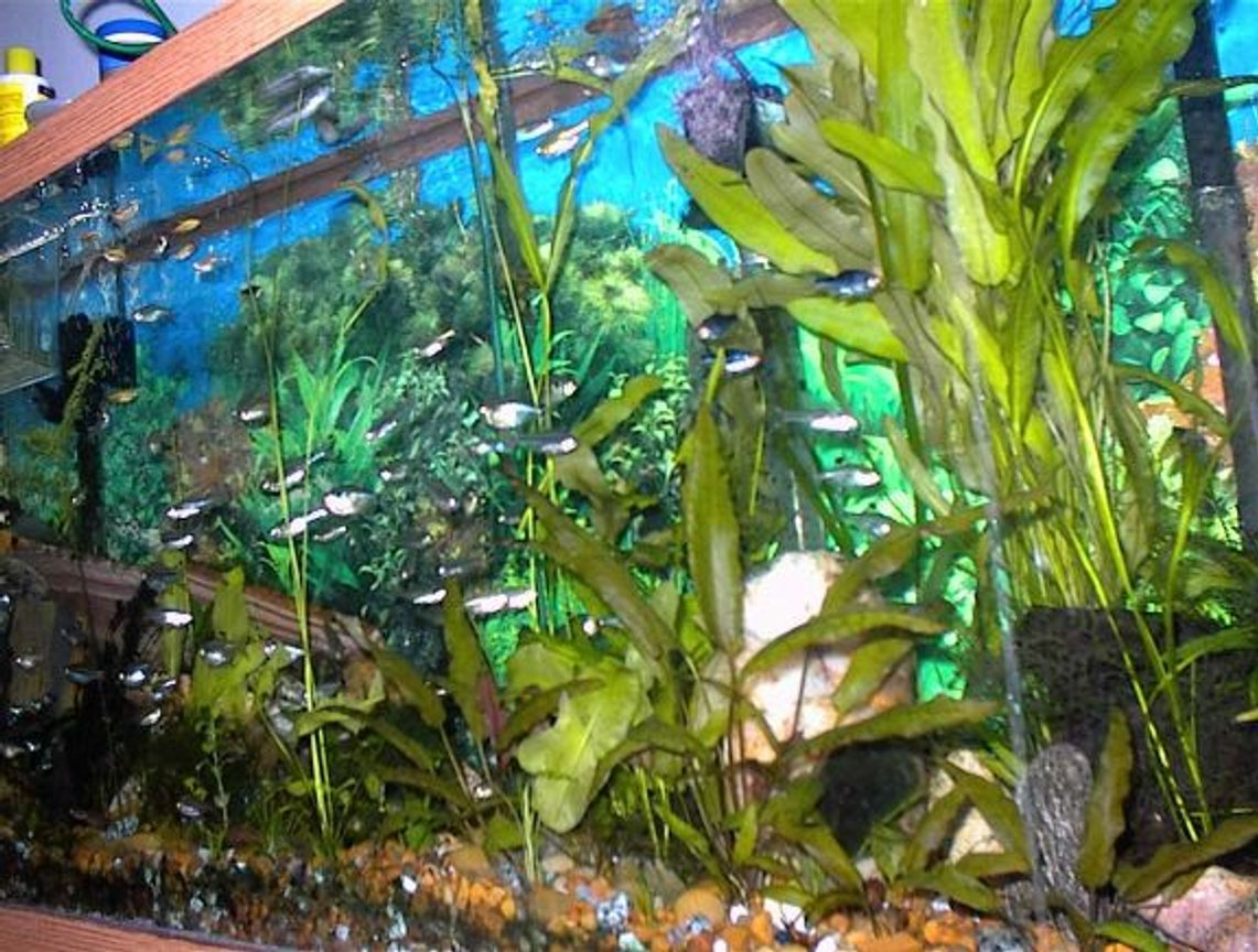 freshwater fish tank (mostly fish and non-living decorations) - Hobbies: Stuff, websites, HTML, JAVA, LAN,Powers of the mind, Lost knowledge, more stuff, and then some other stuff, i wish i could tell ya but then id have to kill ya!