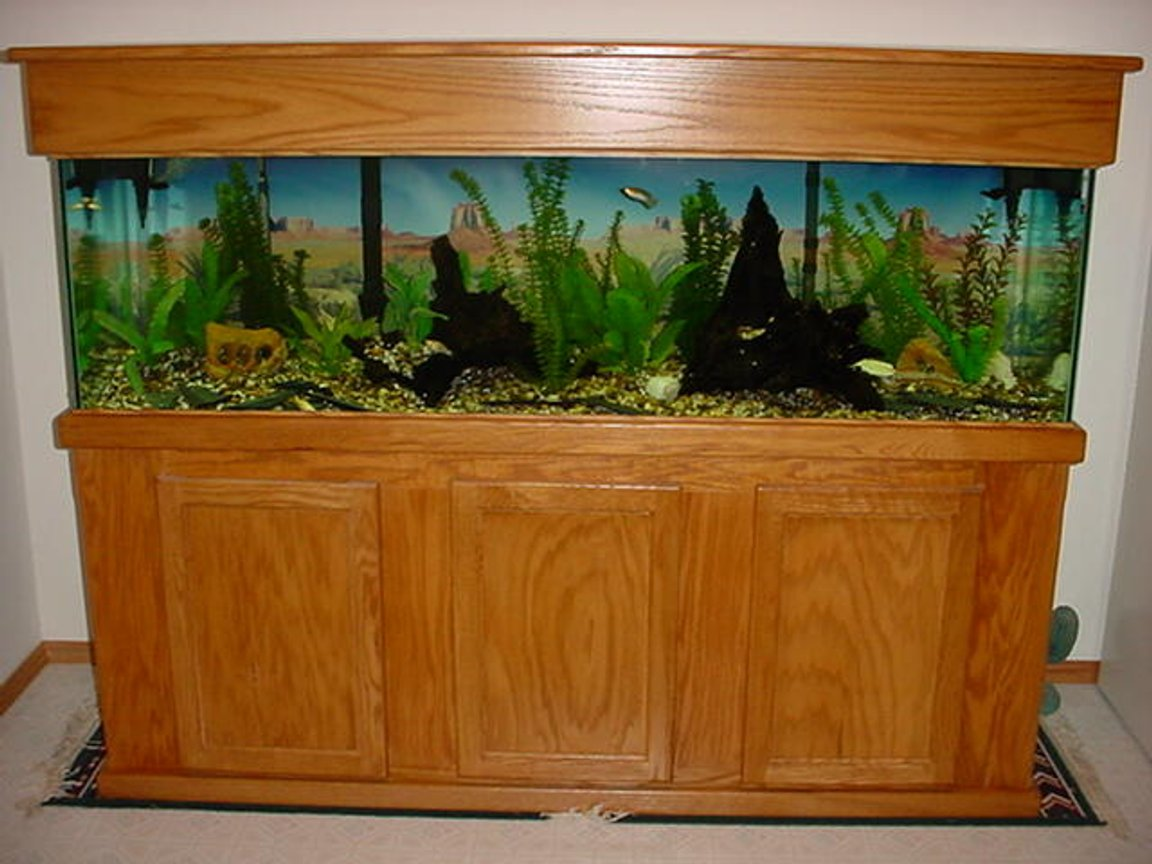 125 gallons freshwater fish tank (mostly fish and non-living decorations) - 125 Gal.