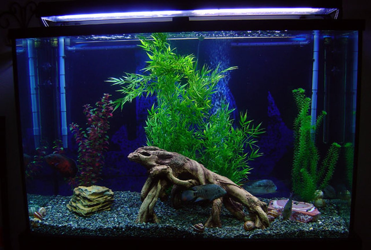 "freshwater fish tank (mostly fish and non-living decorations) - This is my 110 gallon tall tank. The plants are FAKE, not because I dont like real ones, but because my large fish would eat them up. The tank has: 1 6"" Oscar, 1 6"" Flowerhorn, 1 6"" Green Terror, 1 6"" Texas, 1 5"" Jack Dempsey, 1 4"" Firemouth and an 8"" Sailfin Pleco. It's filtered by a pair of XP3 Canisters."