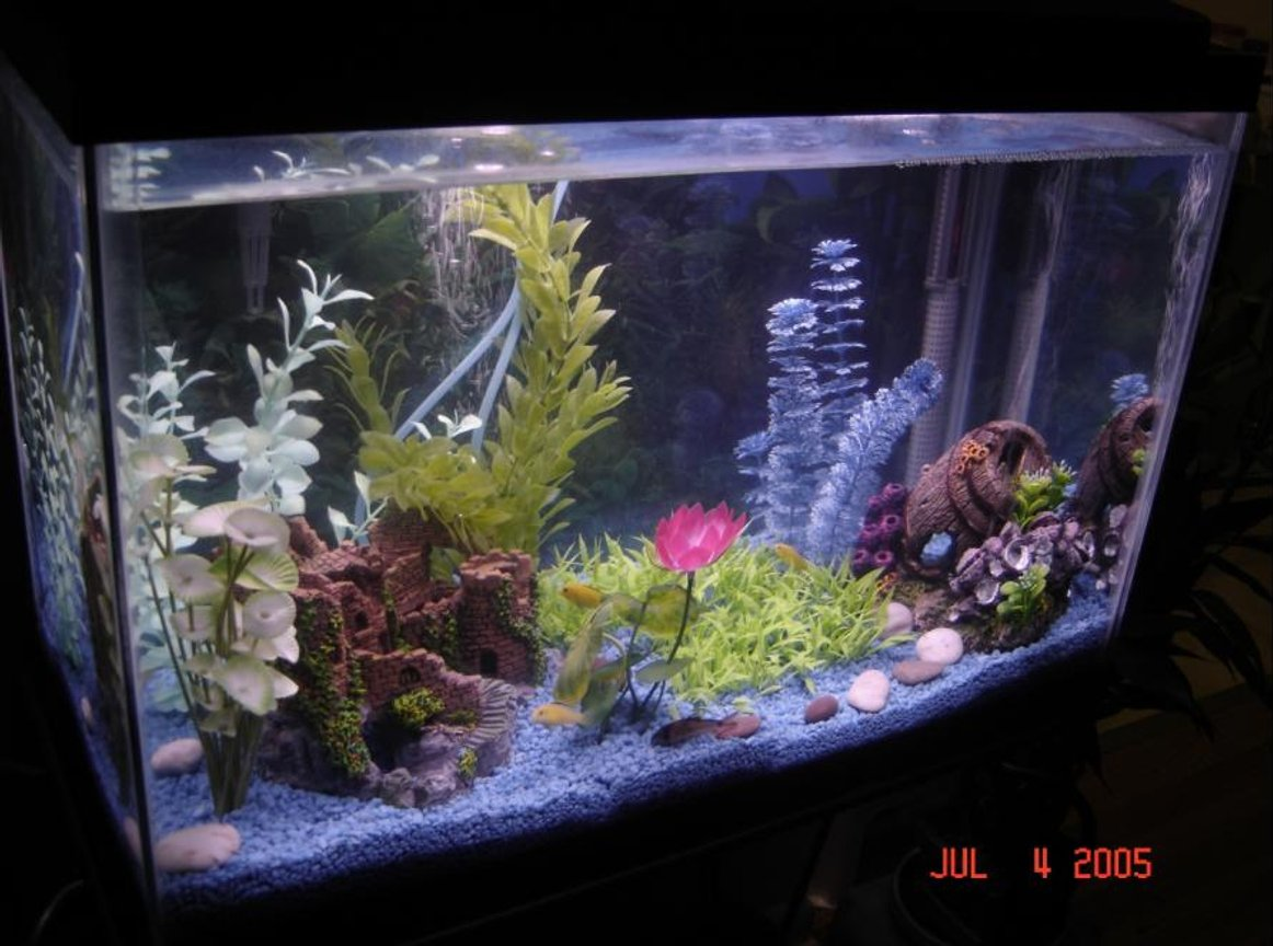 20 gallons freshwater fish tank (mostly fish and non-living decorations) - 1st tank ever, 4 yellow labs, 2 corydoras