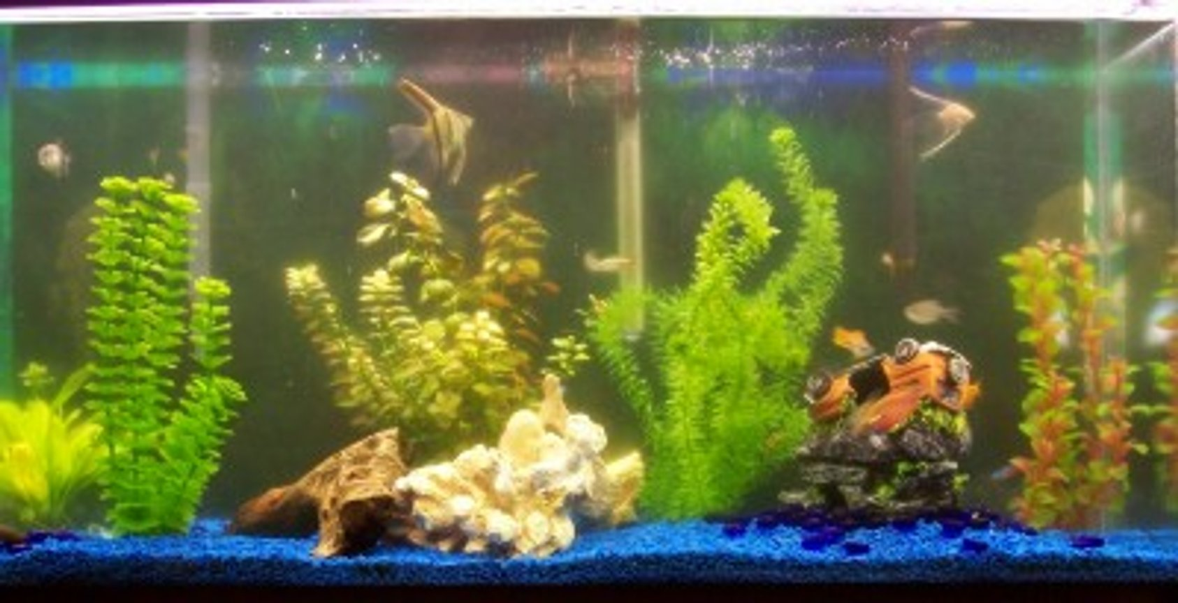 38 gallons freshwater fish tank (mostly fish and non-living decorations) - My 38 gal tank with 24 fish and a couple of plants some fake tell me what you think.