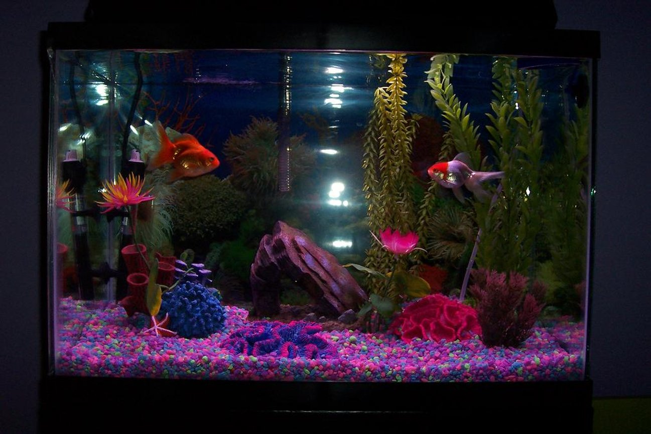 20 gallons freshwater fish tank (mostly fish and non-living decorations) - 20 gal, tall w/ heater, goldfishes, catfishes.