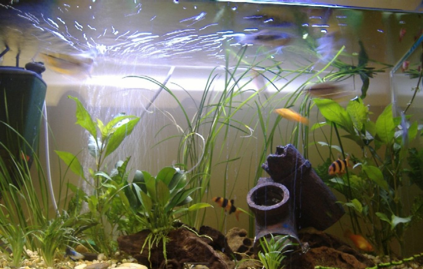 100 gallons freshwater fish tank (mostly fish and non-living decorations) - --------