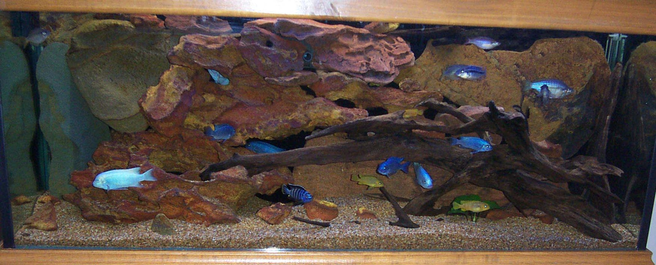 freshwater fish tank (mostly fish and non-living decorations) - 4ft 120 litre tank. mainly cichlids with some Australian native rainbows thrown in which seem to get along with the cichlids just fine.I like LOW MAINTENANCE tanks that still grab your attention (hence no plants!) and there are some GREAT tanks on this site that meet that criteria. Max out filtration for really happy tank. I'm running a fluval 304, 1200lph power head, eheim cannister filter + 16w UV sterilizer. I can't stop them breeding and coloring up so I guess they're happy. Cheers-